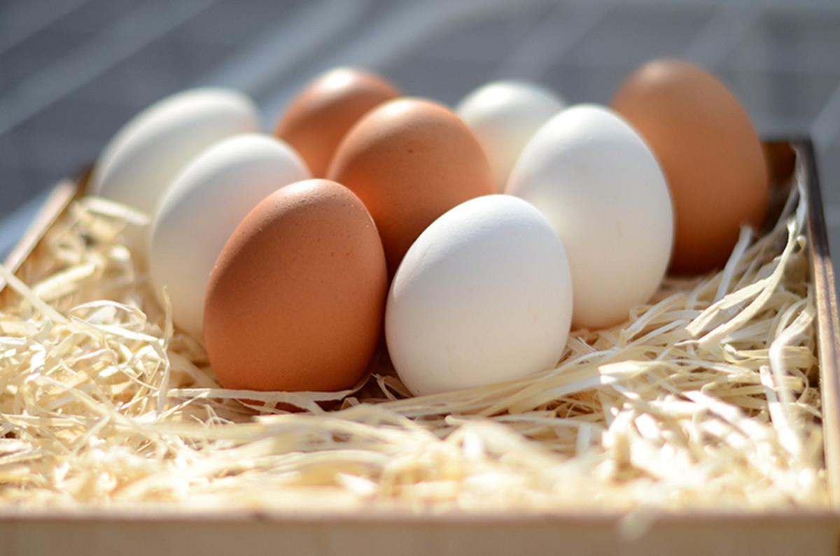 سردخانه نگهداری تخم مرغ